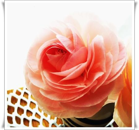 20160417 お花