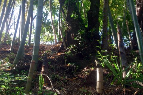 bamboo_nk_1wk_3.jpg
