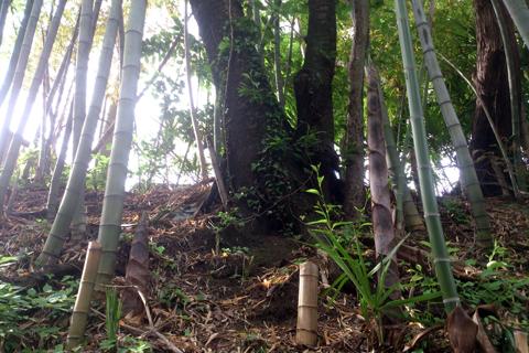 bamboo_nk_1wk_4.jpg
