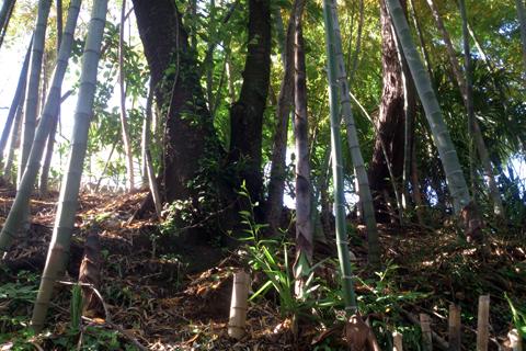 bamboo_nk_1wk_6.jpg