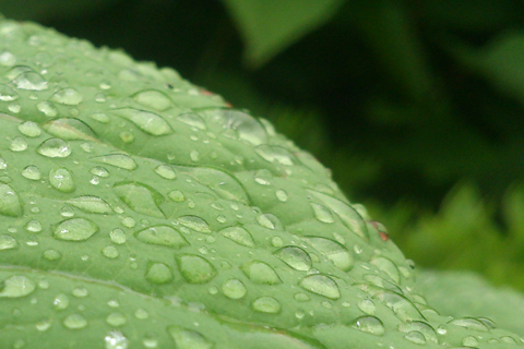 rain_may_day_1.jpg
