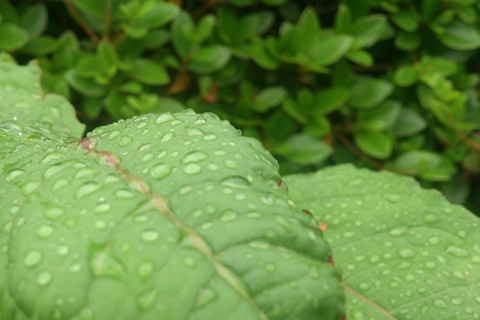 rain_may_day_3.jpg