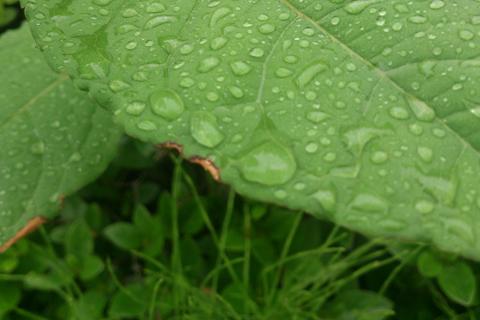 rain_may_day_4.jpg