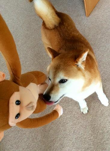 サルと遊ぼう