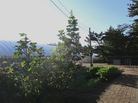 161020_1.jpg