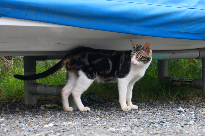 Kitten1607_016.jpg