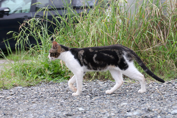 Kitten1607_017.jpg