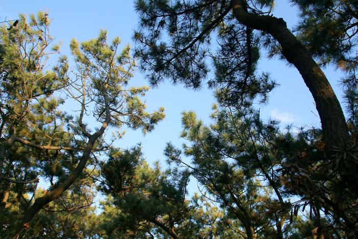 scenery160315_09.jpg