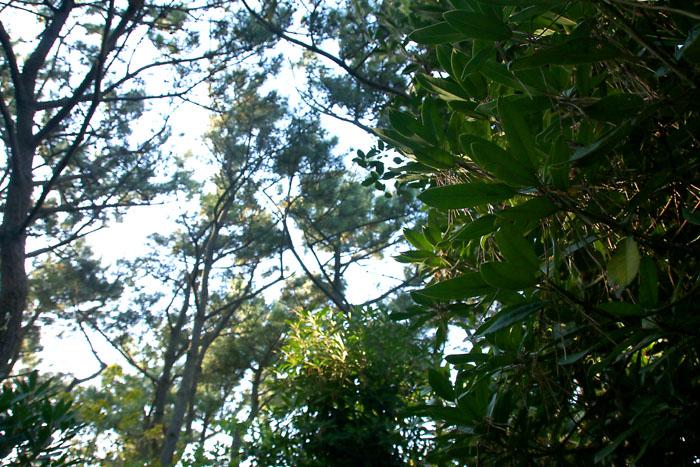 scenery160505_15.jpg