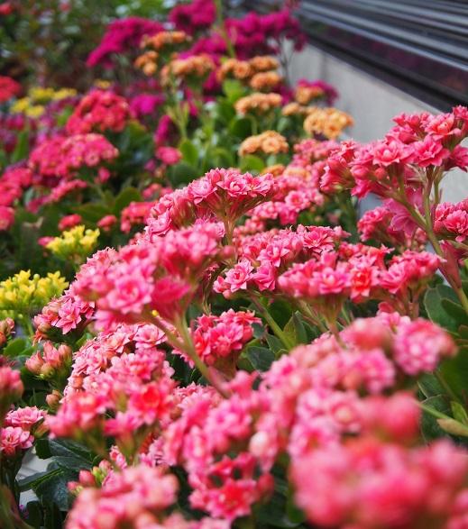 庭の花2-1