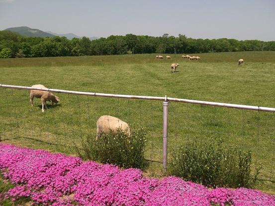 羊ヶ丘展望台3