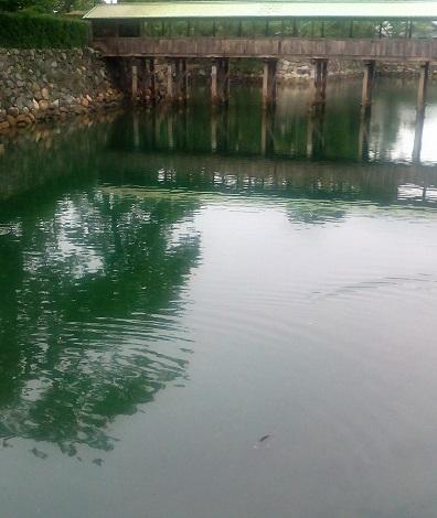 玉藻城のお堀