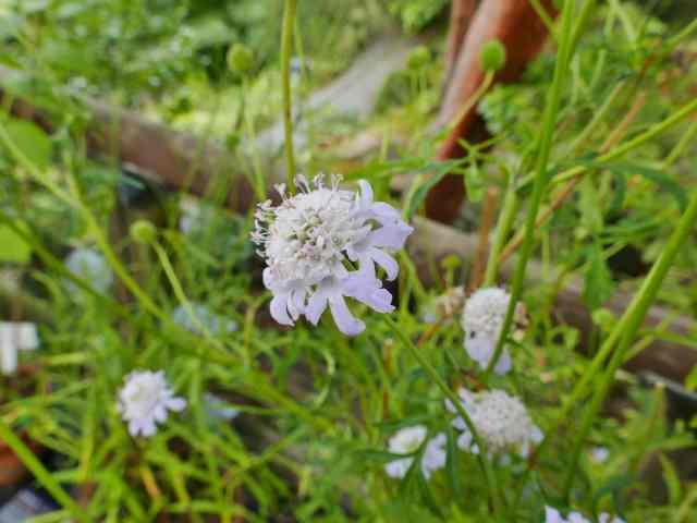 藤袴と和の花展7