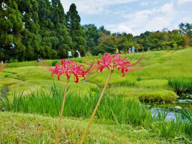 藤袴と和の花展11