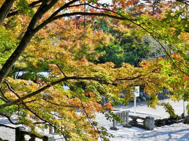 嵐山紅葉8