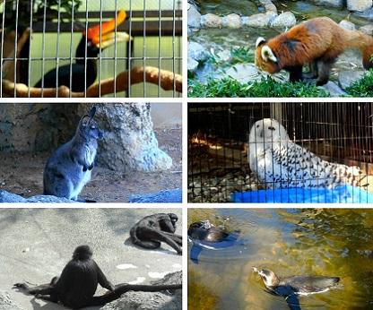行船公園の動物さんたち