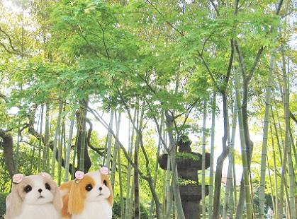 美しい竹林です