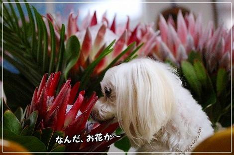 ただのお花ですよ^m^