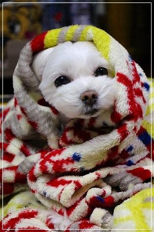 そんなに寒いの?!