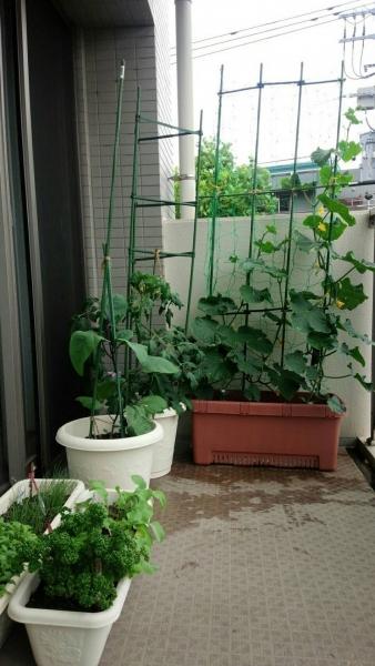 ベランダ菜園2