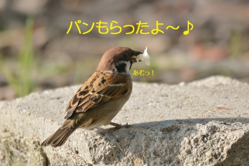 010_201610181919094c1.jpg