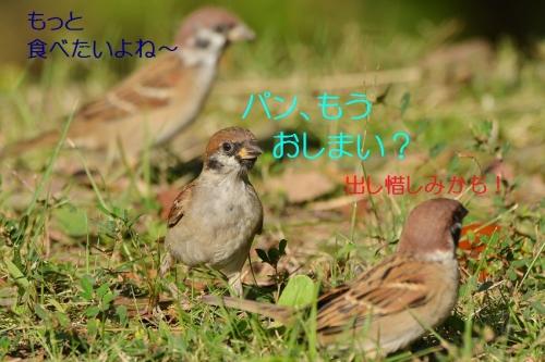 010_20161019190314ef0.jpg