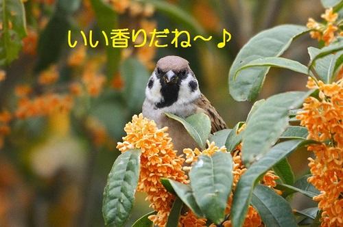 010_20161027195210da7.jpg