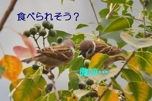 010_201610280053310e5.jpg