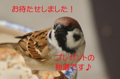 010_2016110417011338b.jpg
