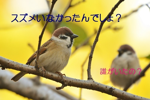 010_20161108192936c20.jpg