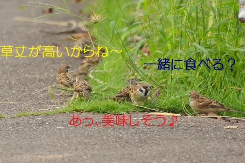 020_20161017202512e69.jpg
