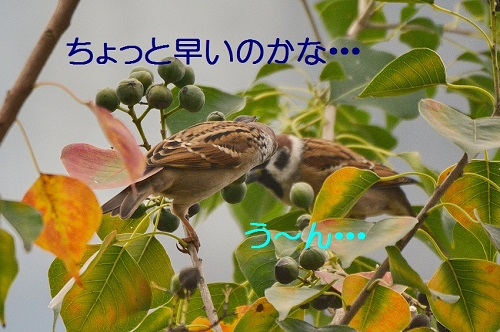 020_20161028005333a5c.jpg