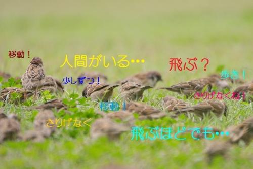030_20161021190610c2d.jpg