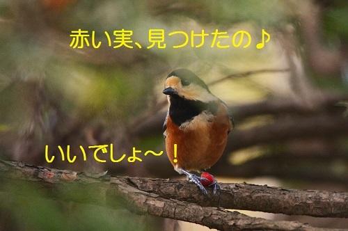 030_2016110819294030b.jpg