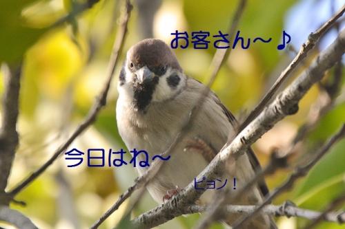 040_20161015223045d49.jpg