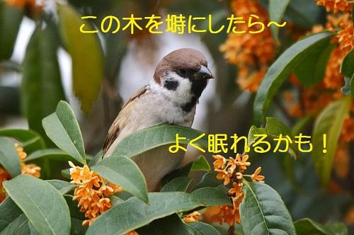 040_20161027195216c95.jpg