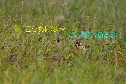 040_201611011952308c1.jpg