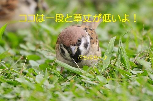 040_20161102023302dcd.jpg