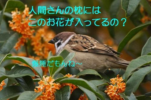 050_20161027195217c79.jpg