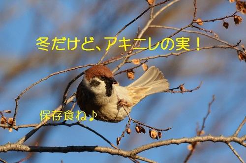 050_20161029194743ee1.jpg