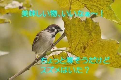 060_20161107183636e7b.jpg