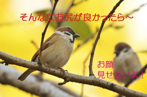 060_2016110819300987a.jpg