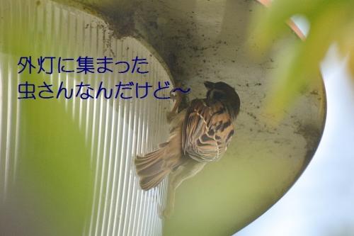 070_20161017203004069.jpg