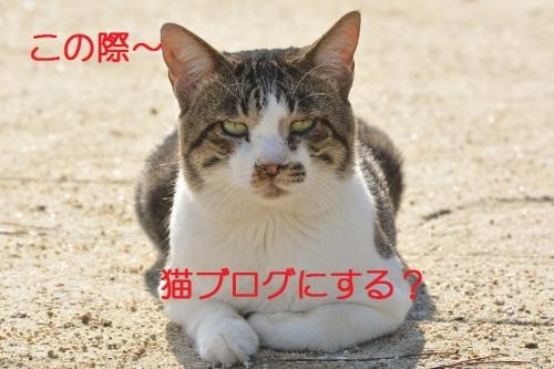 080_2016102119084935f.jpg