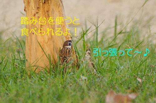080_20161101195344c17.jpg