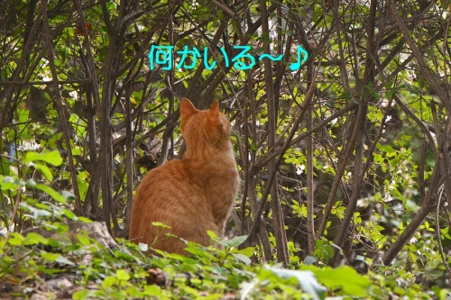 090_201610211911339a0.jpg
