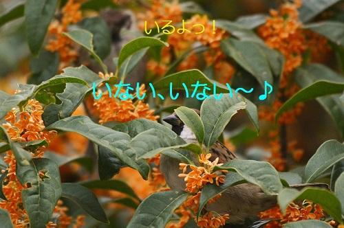 090_201610271952491c4.jpg
