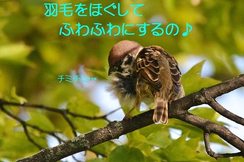 090_2016103119353721a.jpg