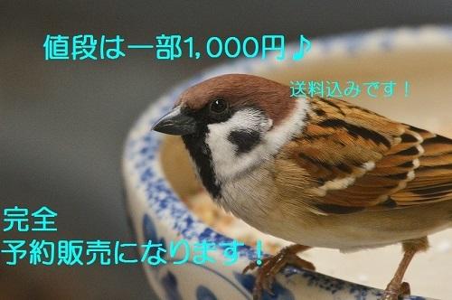 090_20161105175849ea5.jpg