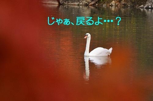 090_201611071836417f4.jpg